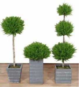 Artificial Trees & Plants